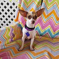 Adopt A Pet :: Sabina - Hamilton, ON