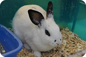Other/Unknown Mix for adoption in Elyria, Ohio - Bugs