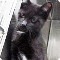 Adopt A Pet :: Havanna - St. Petersburg, FL