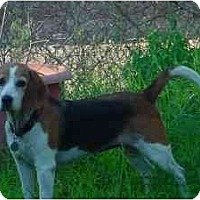 Adopt A Pet :: Julia - Phoenix, AZ