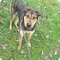 Adopt A Pet :: #462-13 RESCUED! - Zanesville, OH