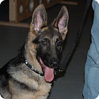 Adopt A Pet :: BROCK - Tully, NY