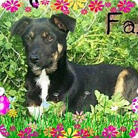 Adopt A Pet :: Faith - El Campo, TX