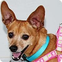 Adopt A Pet :: Crickett - Gilbert, AZ