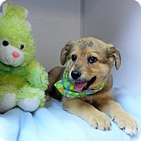 Adopt A Pet :: Aspen - Manning, SC