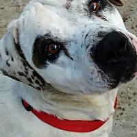 Adopt A Pet :: Bobbie Lea - Surprise, AZ
