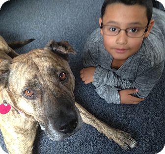 American Pit Bull Terrier Mix Dog for adoption in Manhasset, New York - Muñeca