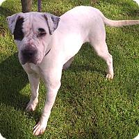 Adopt A Pet :: Clyde - Metamora, IN
