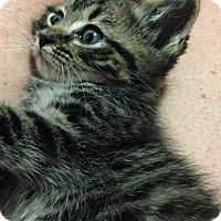 Adopt A Pet :: Gideon - Randleman, NC