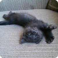 Adopt A Pet :: Wolfman - Encinitas, CA
