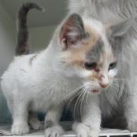 Adopt A Pet :: Cammy - Robinson, IL