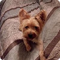 Adopt A Pet :: Sparky - O'Fallon, MO