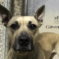 Adopt A Pet :: Catwoman - South Bend, IN