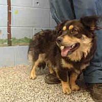 Adopt A Pet :: URGENT ON 8/22  San Bernardino - San Bernardino, CA