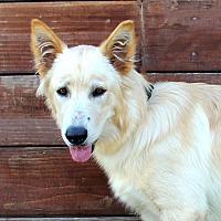 Adopt A Pet :: Mystic - Los Angeles, CA