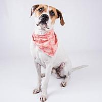 Adopt A Pet :: Prince - Decatur, GA