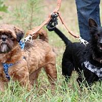 Adopt A Pet :: Bridey and Davy - Saratoga, NY