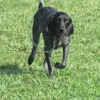 Adopt A Pet :: AMELIA - LaGrange, KY