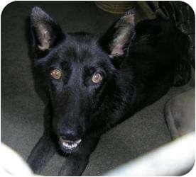 German Shepherd Dog Mix Dog for adoption in Gaffney, South Carolina - Garnet
