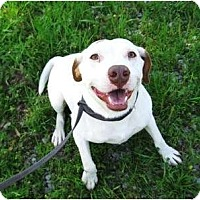 Adopt A Pet :: Capone - Meridian, MS