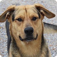 Adopt A Pet :: Melvin - foster Needed - kennebunkport, ME