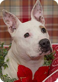 Terrier (Unknown Type, Medium) Mix Dog for adoption in Flint, Michigan - Genie
