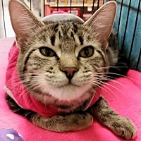 Adopt A Pet :: Cecila - Knoxville, TN