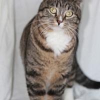 Adopt A Pet :: Steve - Rawlins, WY