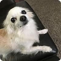 Adopt A Pet :: ZOEY - Gustine, CA