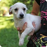 Adopt A Pet :: Tiny Tanner - Washington, DC