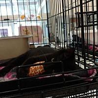 Adopt A Pet :: Petey - Land O Lakes, FL