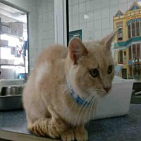 Adopt A Pet :: ATREYU - Canfield, OH