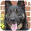 Photo 1 - German Shepherd Dog Mix Dog for adoption in Los Angeles, California - Cassie von Murray