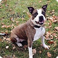 Adopt A Pet :: Sophie - Chicago, IL