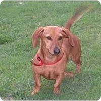 Adopt A Pet :: Chili - Garden Grove, CA