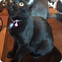 Adopt A Pet :: MONET - Burlington, NC