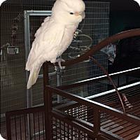 Adopt A Pet :: Griffin - Sylmar, CA