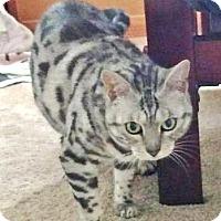Adopt A Pet :: Gigi - Davis, CA