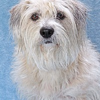 Adopt A Pet :: Bailey - Encinitas, CA