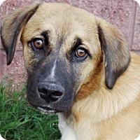 Adopt A Pet :: Jakie - Oxford, MS