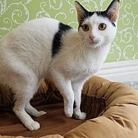 Adopt A Pet :: Lemon - Red Wing, MN