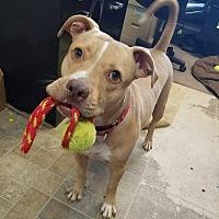 Adopt A Pet :: Marco - Umatilla, FL