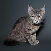 Adopt A Pet :: Dusty - Jersey City, NJ