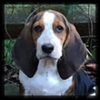 Adopt A Pet :: Billie Sue - Marietta, GA