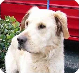 Labrador Retriever Mix Dog for adoption in San Diego, California - HERO
