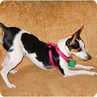 Adopt A Pet :: Gracie Dots - Oklahoma City, OK