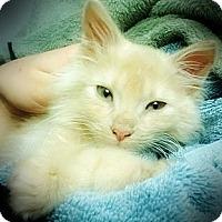 Adopt A Pet :: Wentworth - Santa Rosa, CA