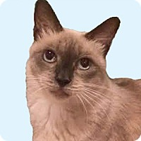 Adopt A Pet :: Minnehaha - Laguna Woods, CA