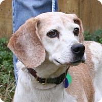 Adopt A Pet :: Vorena Hughes - Waldorf, MD
