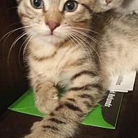 Adopt A Pet :: Mr. Diggle - Austin, TX
